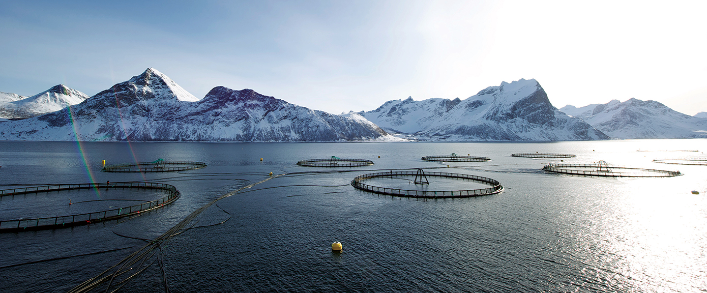 Multiconsult havbruk. Foto av Johan Wildhagen