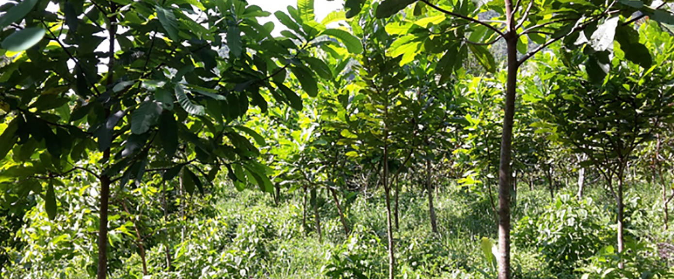 Skogplanting ved Bajo Frío | Foto: Jørn Stave, Multiconsult